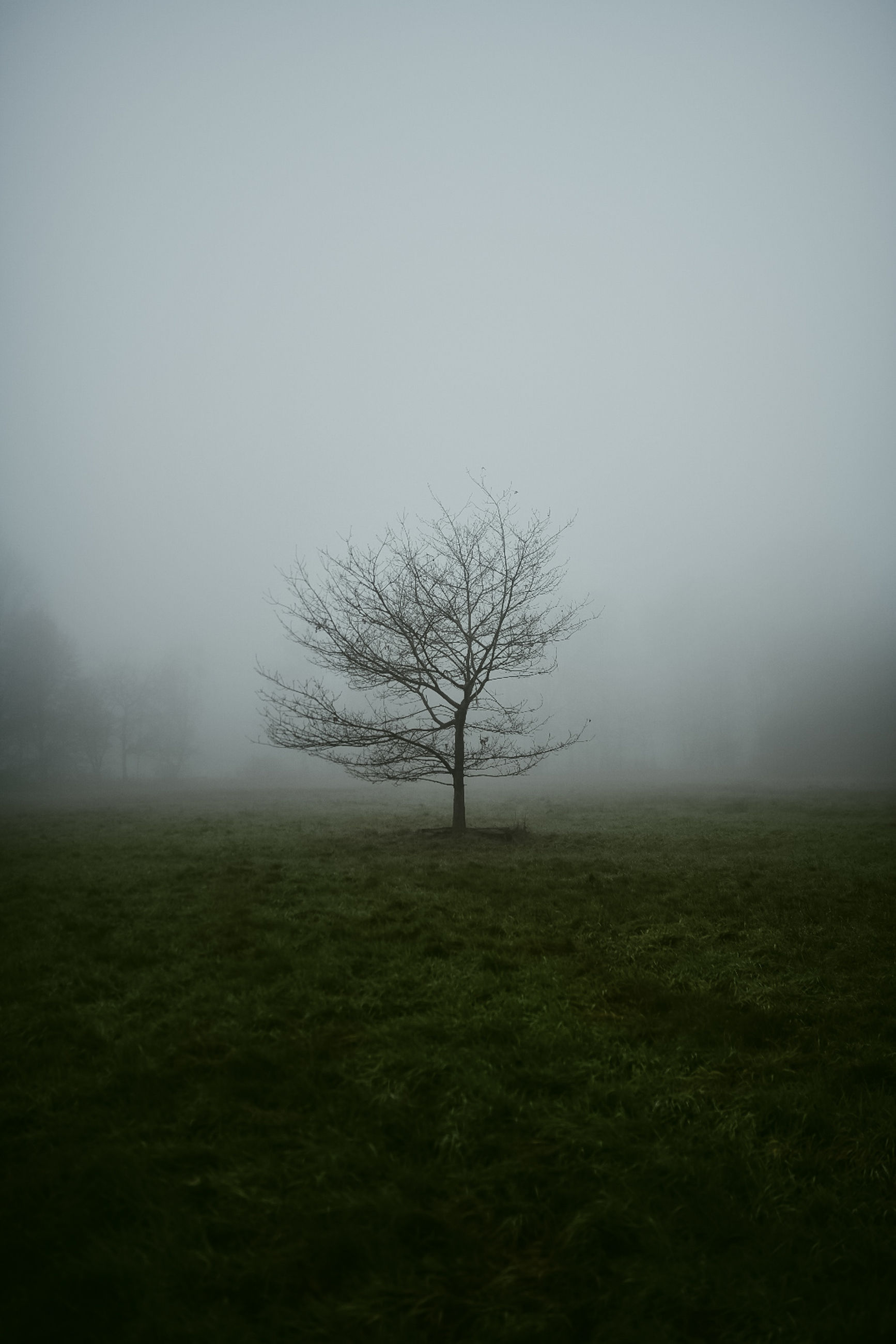 fog, tree, plant, beauty in nature, environment, tranquil scene, field, landscape, sky, bare tree, tranquility, solitude, land, non-urban scene, isolated, grass, scenics - nature, nature, no people, outdoors, hazy