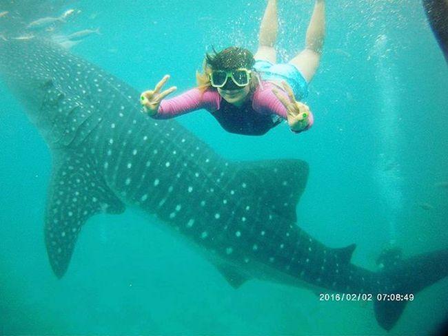 Late post. Under the sea! 🐳😄🏊 Whalesharkwatching Wanderkat 2016travels Oslob
