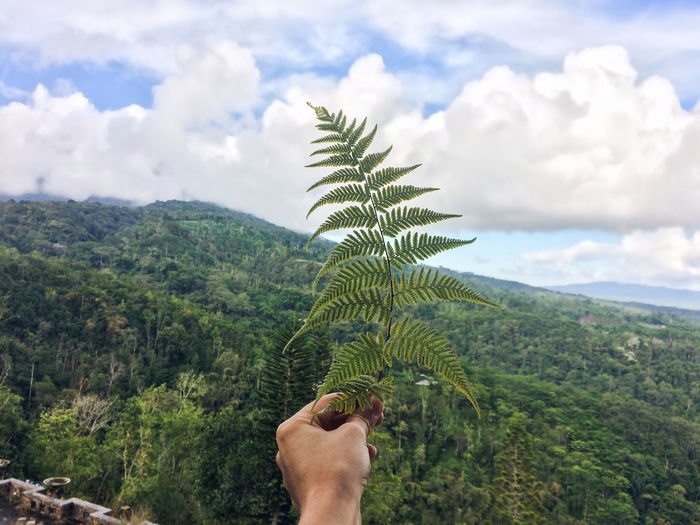 Human Hand Holding Leaves With Mountain In Background