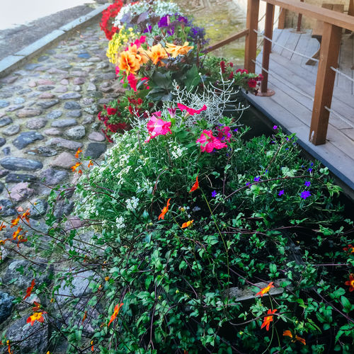 Colourful pot plants, Kuldiga, Latvia Abundance Blooming Change Day Flower Fragility Freshness Growing Growth Kuldiga Latvia Leaf Nature No People Outdoors Plant Pot Red Springtime