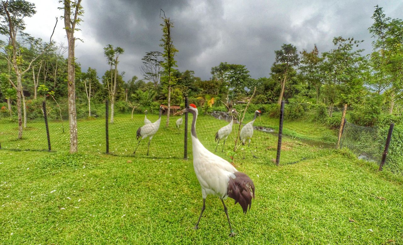 Scenic View Of Birds Perching On Grass Against Cloudy Sky