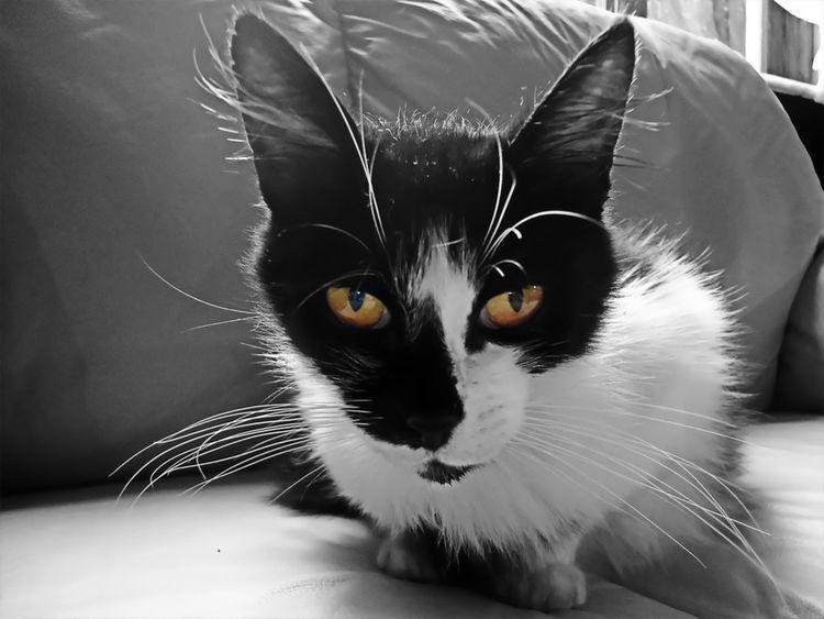 Animals Colorsplash Eye4photography  Eye4black&white