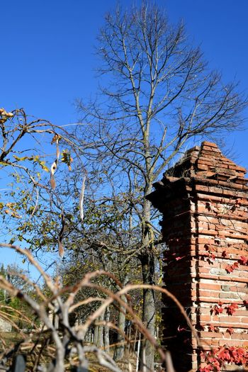 Autumn Langhe Brick Column Brick Details Architecture Building Exterior Built Structure Day Outdoors Low Angle View Tree Sky No People Clear Sky Branch Nature