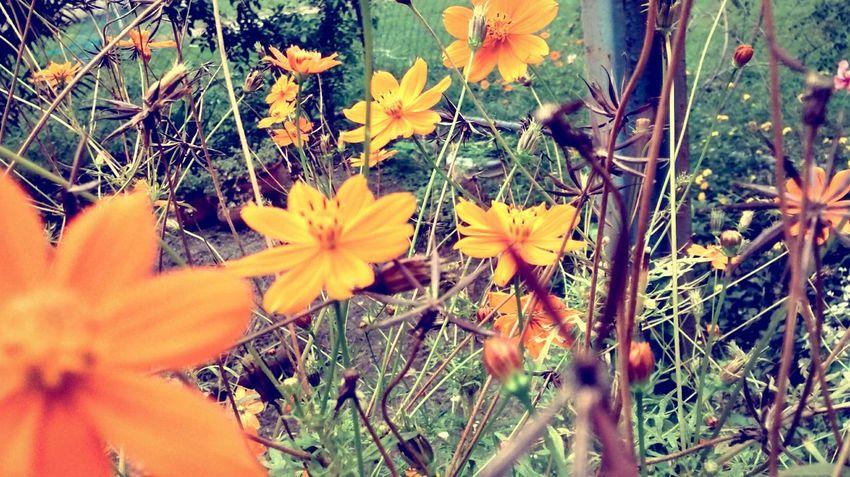 Jardim da minha escola☀ Naturaly & Perfect Natural Flowers The Daylight