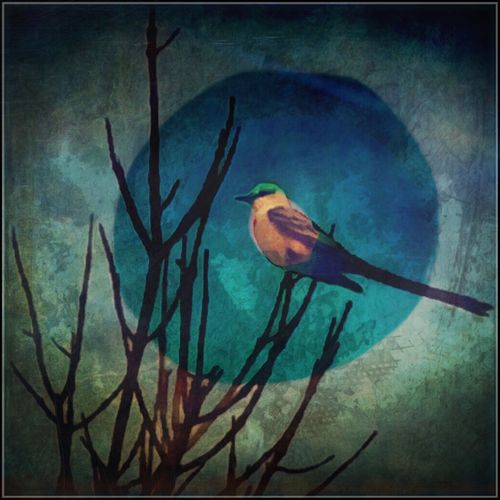 Bird Expression Vibrant IPhoneography Wall Art
