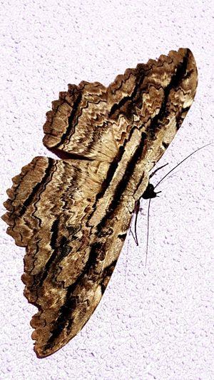 Animal Butterfly Animal Photography Bella Mirenquienmevinoavisitar Ilovethat