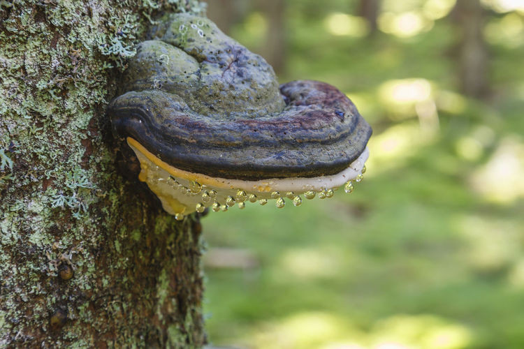 Close-up of mushroom growing on tree trunk