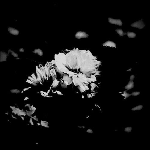 Flowers Blackandwhite Claunch 72 Monochrome Film Monochrome Monoart Bws_worldwide Eye4photography  Ee_daily Bw_collection