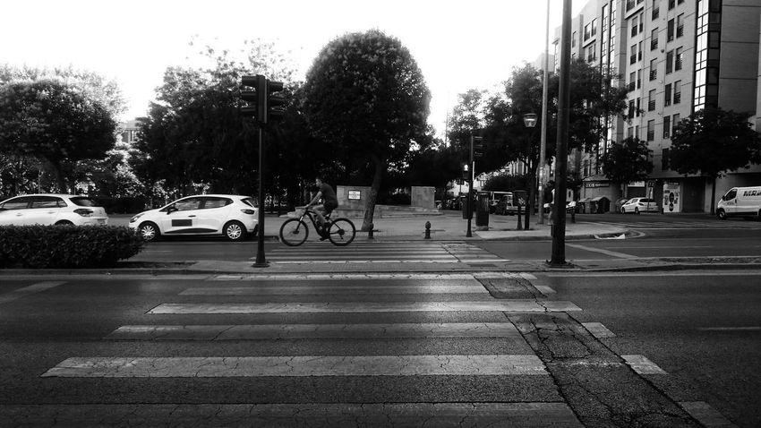 Cyclist Architecture Bicycle Black And White Blackandwhite Building Exterior Car City City Street Crossing Crosswalk Day Land Vehicle Light Mode Of Transportation Monochrome Motor Vehicle Outdoors Road Road Marking Sign Street Symbol Transportation Zebra Crossing