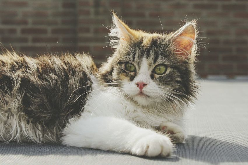 Cat Cats Kitten Kittens Photography Cat Photography Portrait Beauty In Nature Beautiful Cute EyeEm Selects Pets Kitten Feline Sitting Domestic Cat Portrait Whisker Close-up Tabby Cat Ear Cat Tabby Animal Eye At Home Fluffy Animal Hair