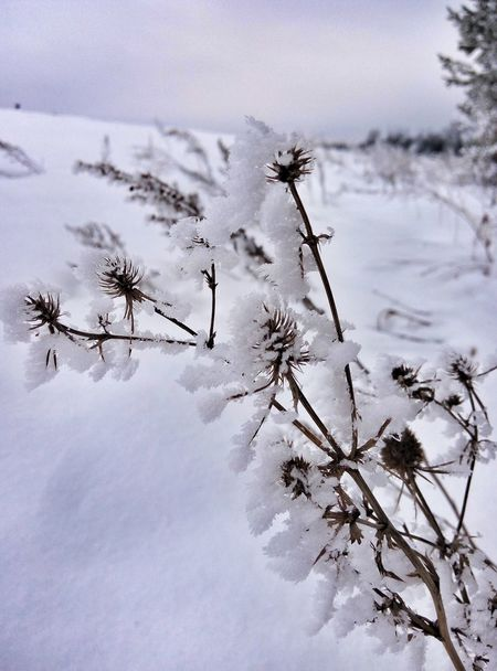 Зимняя сказка) Winter Snow Cold Temperature Nature Россия Beauty In Nature EyeEm Best Shots EyeEm Nature Lover EyeEm Gallery Eye4photography  White Color Tree Nature_collection Nature Photography Naturelovers Nature_perfection Naturephotography Naturelover Photo Photography Photographer Photographic Memory Meizu Photooftheday Photos