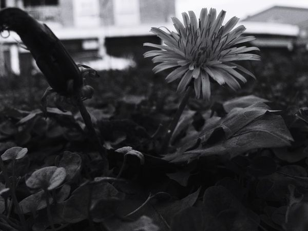 Nature Black & White Monochrome_life