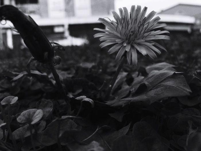 Nature Black & White Monochrome_life