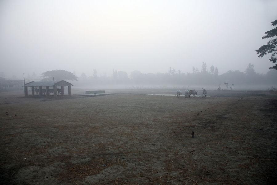 Misty morning in the Bengal countryside Kumrokhali Environment Field Fog Foggy Forest India Jungle Kumrokhali Landscape Mist Misty Nature Palm Tree Plant Rainforest Scenics Sunrise Tranquil Tree Tropical Warm West Bengal Wet Wild Wilderness