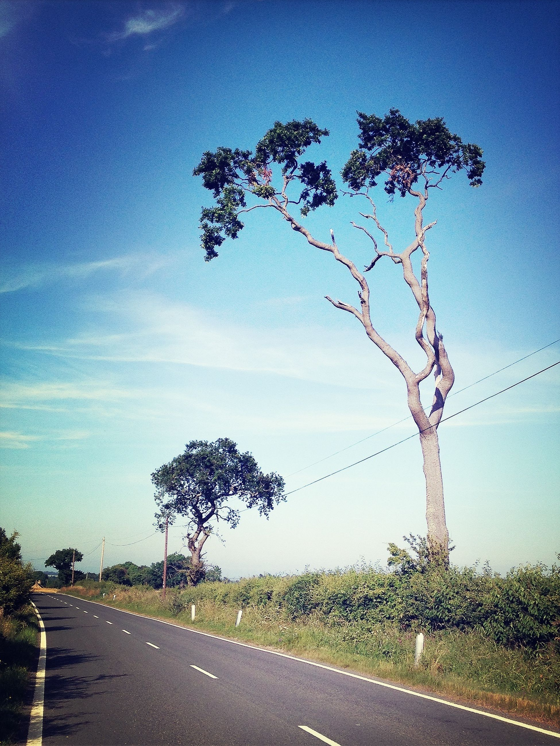 tree, road, transportation, the way forward, sky, country road, road marking, diminishing perspective, street, empty road, blue, tranquility, vanishing point, nature, growth, power line, bare tree, electricity pylon, connection, long