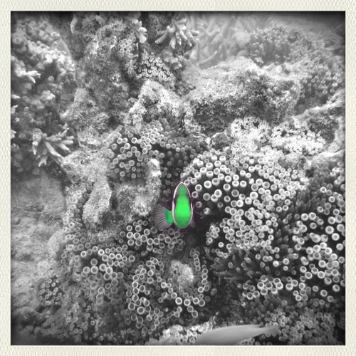 Noumea, Nouvelle Caledonie Blackandwhite Monochrome Taking Photos Hello World