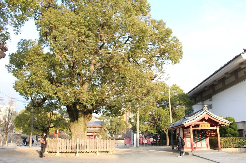 ASIA Canon Canonphotography Culture Japan Kansai Kyoto Nature OSAKA Travel Traveling Tree