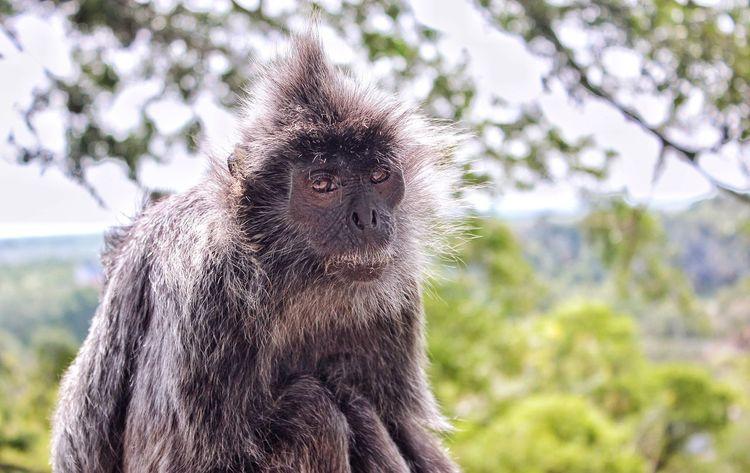 monkey Monkey EyeEm Selects Animal Themes Mammal One Animal Animal Animal Wildlife Focus On Foreground Nature Plant Tree Animal Head  Animal Body Part Close-up