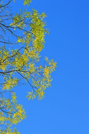 Taking Photos Tree_collection  Tree And Sky Tree Branches Bkue Sky Nature_collection Natural Naturelovers Summer Views Enjoying Life