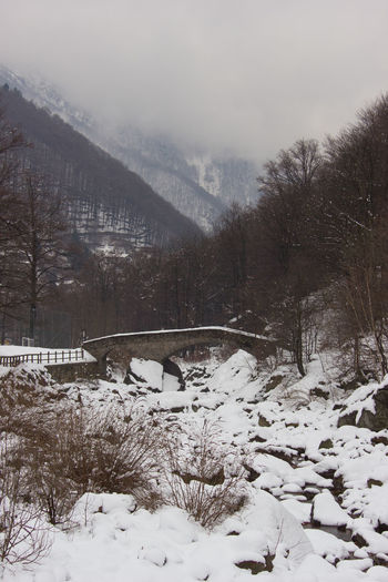 Snow covered trees by bridge against sky during winter