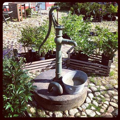 Anmano Angelislands Gardens