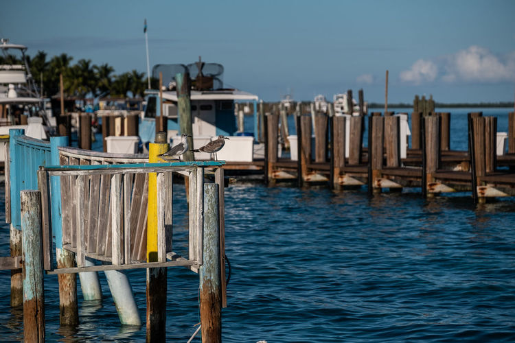 Waiting for Fish Water Sea Wood - Material Sky No People Nature Day Architecture Focus On Foreground Post Built Structure Pier Wooden Post Waterfront Chair Outdoors Beach Blue Tranquility Bimini Marina Seagulls