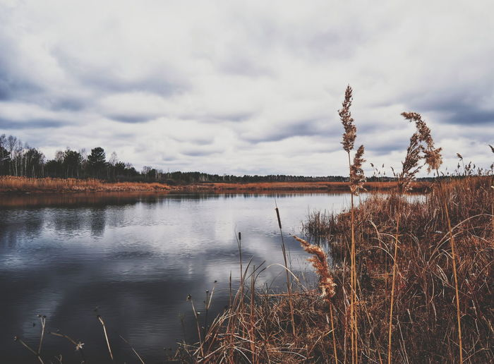 Beauty In Nature Belarus Nature Cloud Cloud - Sky Cloudy EyeEm Nature Lover Grass Growth Idyllic Lake Landscape Landscapes With WhiteWall Nature Overcast Plant Reflection River Scenics Sky Spring Nature Tranquil Scene Tranquility Tree Water Weather