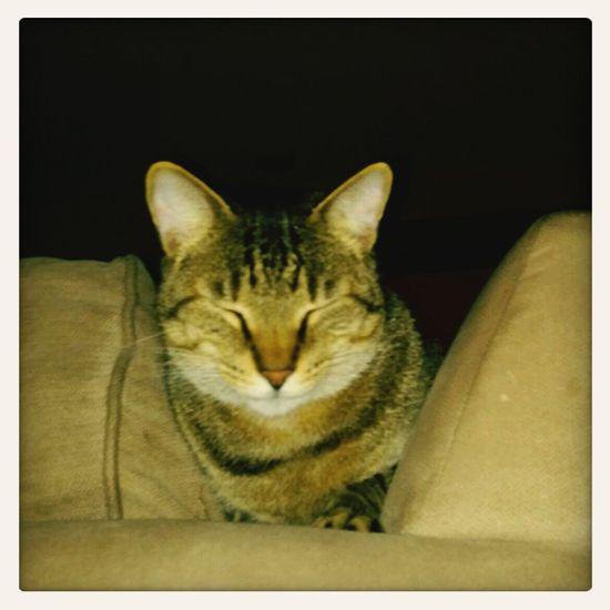 Kitty!  Cuddle
