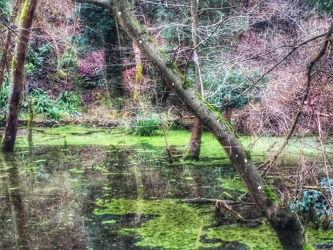 Nature Tree Water Reflection Growth Tranquility Outdoors Forest Lake Beauty In Nature Tree Trunk Tranquil Scene No People Day Scenics Grass