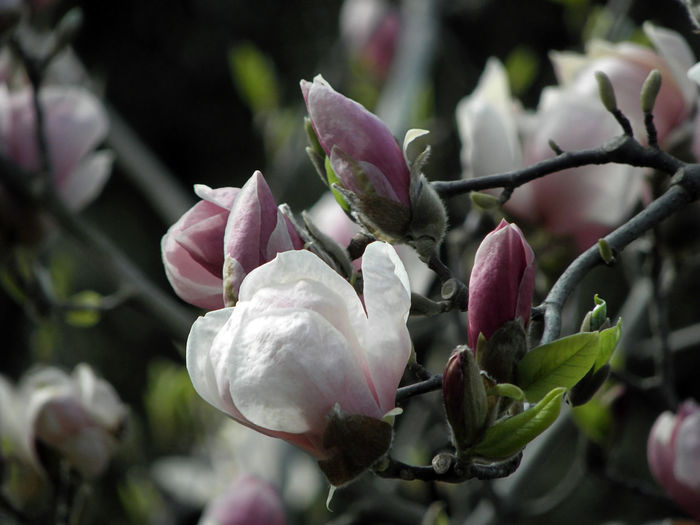 Close-up of fresh white flowering plant