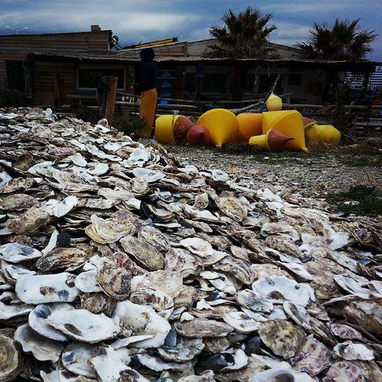 Oyster  Oysterheaven Food Foodporn Shells Sea Ocean Beach Seafood Delish Contrast Luxury Instagood Instatravel Picoftheday Sundaylunch Lunch Foodpic Trip Travelgram Igtravel Mytravelgram Delicious Gnam
