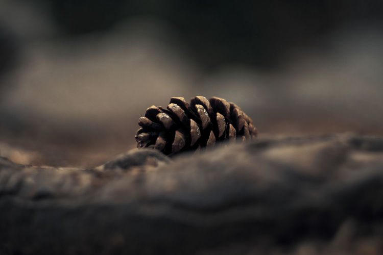 Brown Close-up Cone Day Focus On Foreground Helios 44-2 Natural Pattern Nature No People Outdoors Pine Pine Cone Pine Trees Selective Focus Sonyalpha Tranquility Focus Object Color Palette Non-urban Scene Bokeh Autumn Colors Autumn🍁🍁🍁 Low Angle View Maximum Closeness Bokehlicious