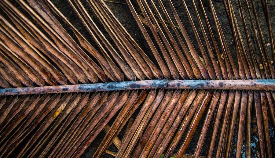 Full frame shot of dry palm leaf
