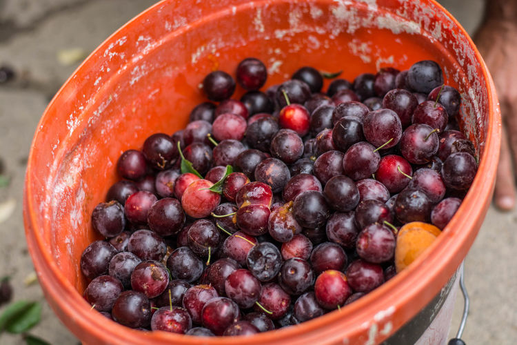 summer of 2017 Abundance Berry Fruit Close-up Freshness Fruit Large Group Of Objects No People Red