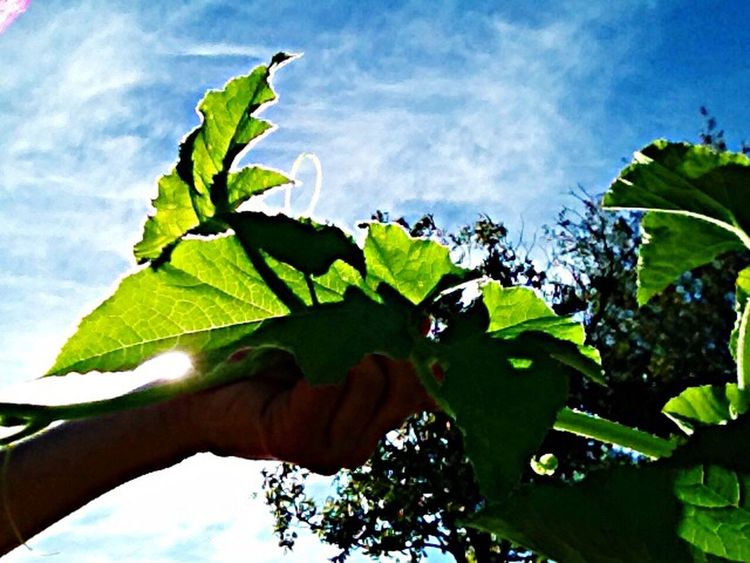 Gardening Growyourownfood Garden Photography Vegetarian Vegetarian Food Simplicity.  Simple Things In Life Natural Food Sunshine ☀ Dirt Natural Beauty! Texas Made Natural Photography Countrygirl Enjoying Life Beautiful Day Natural Redhead Garden Pumkinpatch HealtyFood