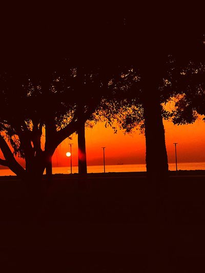 Günaydın Mersin.. Mersin Sunset Silhouette Sky Orange Color Tree Beauty In Nature Nature Tranquility Idyllic Copy Space No People Non-urban Scene Scenics - Nature Land Water Plant Trunk Tranquil Scene Outdoors Growth 17.62° My Best Photo