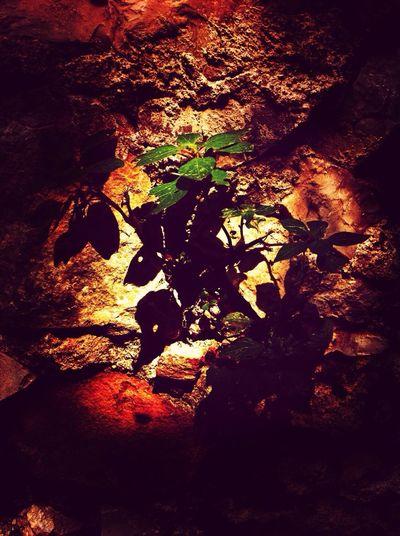 Cherish Life Nature Green Force PicFeeling EyeEm Best Edits