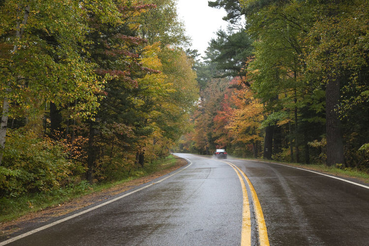Car driving along curved road with autumn trees on rainy day in Minnesota Curve Driving Green Color Minnesota Rain Scenic Superior National Forest USA Aspen Trees Autumn Beauty In Nature Birch Trees Cat Foliage Forest Highway Leaves Maple Tree North Orange Color Pine Tree Road Season  Tree Yellow Color