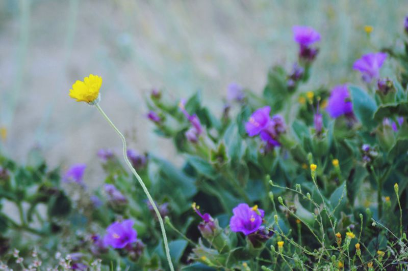 Flower Nature Plant Growth Beauty In Nature Freshness Fragility Blooming Field Outdoors Close-up Day No People Flower Head Crocus Wildflowers EyeEmNewHere Paint The Town Yellow
