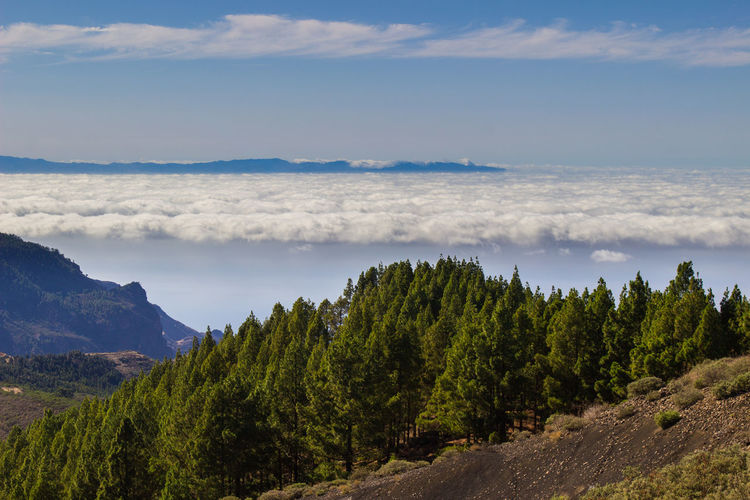 Beautiful Nature Canary Islands Gran Canaria Gran Canary Island Nature Perspectives On Nature Above The Clouds Beauty In Nature Cloud - Sky Forest Green Color Landscape Landscapes Mountain Nature Tree View From Above