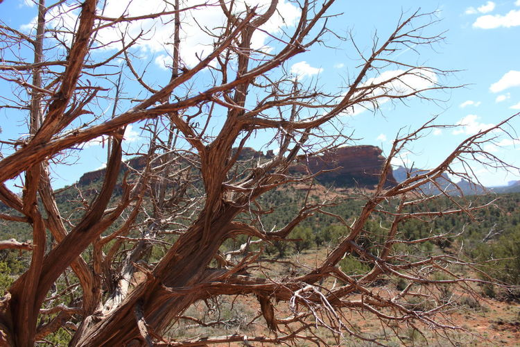 Tree Branch Plant Tranquility Bare Tree No People Sky Day Beauty In Nature Nature Tranquil Scene Land Scenics - Nature Non-urban Scene Environment Trunk Tree Trunk Outdoors Landscape Remote Dead Plant Arid Climate