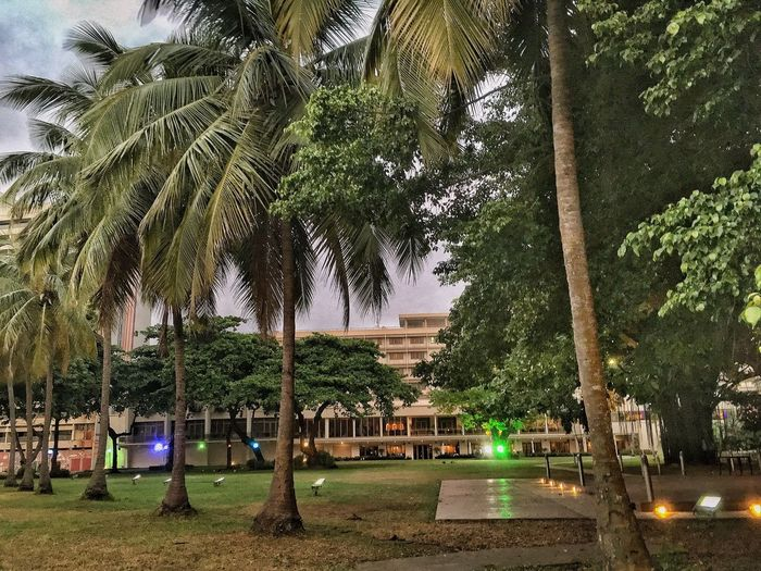 Lagos Tree Plant Nature Built Structure Growth Architecture Day Park Outdoors No People Green Color Park - Man Made Space Building Exterior Building Grass