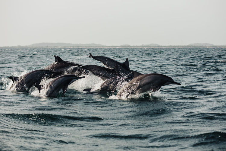 Pod of dolphins in sea against sky