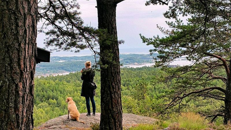 Summer In Norway Norway 2015 Norway Labrador Retriever Nature Labrador Lotte Wood Friends Hikking