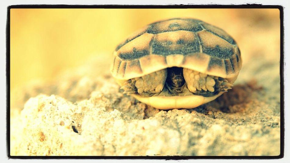 Antalya Turtle Perge