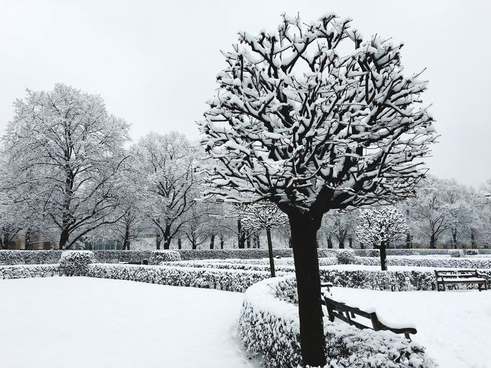 Garden Photography Snow Winter Cold Temperature Weather Bare Tree Nature Tree Beauty In Nature Tranquility Landscape No People Tranquil Scene Sky Clear Sky Frozen Scenics Outdoors Branch