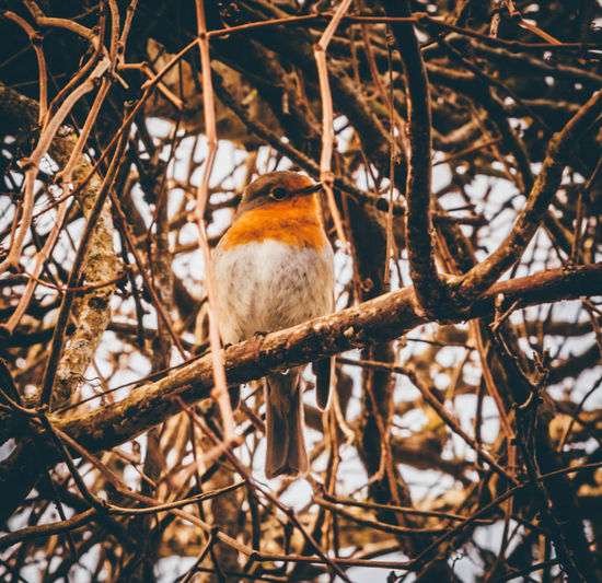 Abstract Animal Themes Bird Branch Chainlink Fence Change Close-up Cornwall Cornwall Uk Day Fence Focus On Foreground Growing Growth Mystery No People One Animal Outdoor Photography Outdoors Perching Protection Robin Redbreast Safety Wildlife