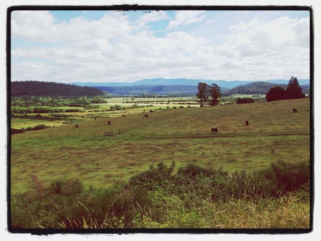 Rural Scenes Tasmania Mountains Great Western Tiers Tasmania