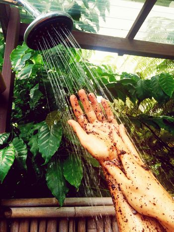Coffee scrub Coffee Scrub Coffee Tree Outdoor Shower Hawaiilife Hawaii In The Shower Natural Beauty Beauty Routine Natural Cosmetics In Nature