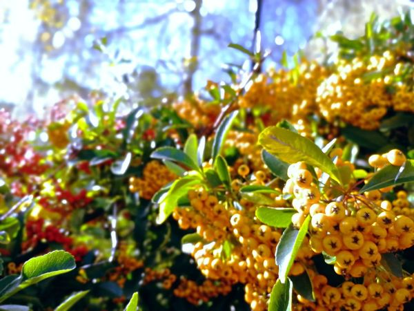 sunny autumn day Berries Collection Berries Red And Orange Orange Sunny Autumn Day Herbstspaziergang Sonniger Herbsttag Beeren Autumn Close-up